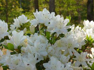 Blossom16 copy