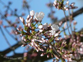Blossom3 copy
