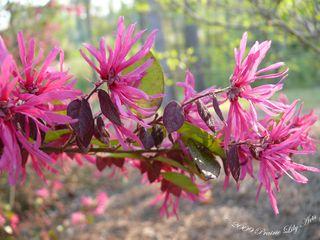Blossom14 copy