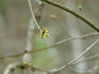 Blossom6 copy