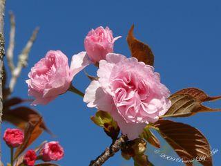 Blossom11 copy