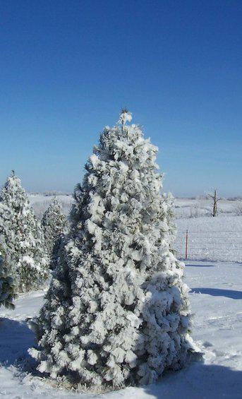 Christmassnowfarmcrop