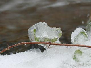 Icycreekblog